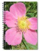 Pasture Rose Rosa Carolina Spiral Notebook