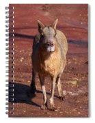 Patagonian Mara Spiral Notebook