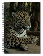 Paws Of A Jaguar Spiral Notebook