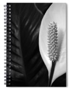 Peace Lily Spiral Notebook