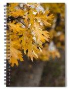Peacefull Fall Walk Spiral Notebook