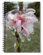Peach Blossom In Ice Spiral Notebook