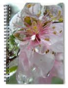 Peach Blossom In Ice Two Spiral Notebook