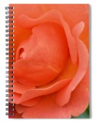 Peach Faced Rose Spiral Notebook