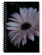 Peach Gerba Daisy  Spiral Notebook