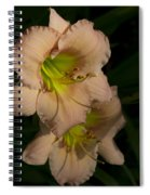 Peach Parfait Daylilies Spiral Notebook