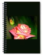 Peach Rose Watercolor Spiral Notebook
