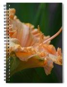 Peach Rufflette - Lily Spiral Notebook