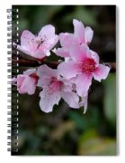 Peach Tree Blooms Miskitos Swoon Spiral Notebook