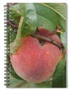 Peach For Harvest   # Spiral Notebook