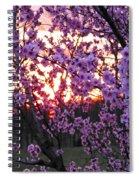 Peachy Sunset 1 Spiral Notebook