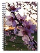 Peachy Sunset 2014 #2 Spiral Notebook