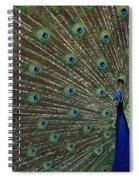 Peacock 17 Spiral Notebook