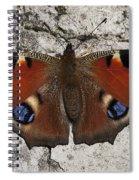 Peacock 2 Spiral Notebook