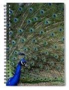 Peacock 8 Spiral Notebook
