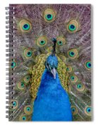 Peacock And Proud Plumage Spiral Notebook