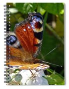 Peacock Butterfly Spiral Notebook