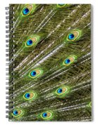 Peacock Feather Abstract Pattern Spiral Notebook