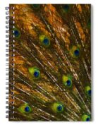 Peacock Feathers 2 Spiral Notebook