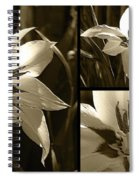 Peacock Gladiolus Triptych Spiral Notebook