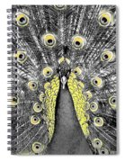 Peacock In Black And White With Selective Color Spiral Notebook