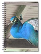 Peacock In The Rafters Spiral Notebook