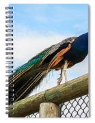 Peacock On Fence 1 Spiral Notebook