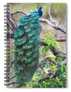 Peacock Perching On A Branch, Kanha Spiral Notebook
