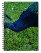 Peacock Portrait 4 Spiral Notebook
