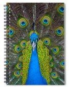 Peacock Portrait Spiral Notebook