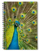 Peacock Pride Spiral Notebook