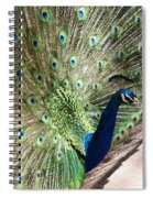 Peacock Show Spiral Notebook