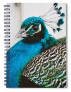 Peacock Square Spiral Notebook