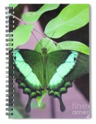 Peacock Swallowtail Spiral Notebook