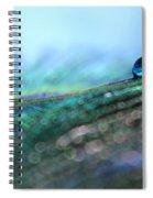 Peacock Tear Spiral Notebook