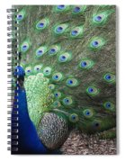 Peacock Up Close Spiral Notebook