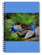 Peacocks In The Garden Spiral Notebook