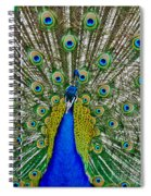 Peafowl Peacock Spiral Notebook