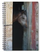 Peak A Book Horse Spiral Notebook