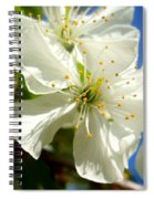 Pear Blossom Spiral Notebook