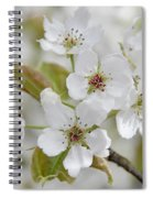 Pear Tree White Flower Blossoms Spiral Notebook
