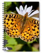 Pearl Border Fritillary Butterfly On An Aster Bloom Spiral Notebook