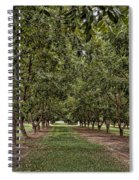 Pecan Orchard Sahuarita Arizona Spiral Notebook