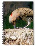 Grab A Grub Spiral Notebook