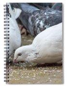 Pecking Pigeons Spiral Notebook