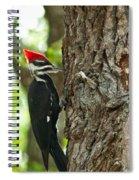 Pecking Woodpecker Spiral Notebook