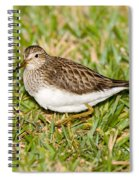 Pectoral Sandpiper Spiral Notebook
