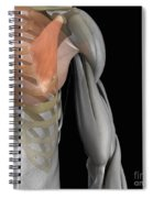 Pectoralis Minor Muscle Spiral Notebook