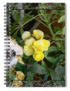 Peek-a-boo Spiral Notebook