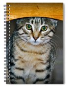 Peekaboo Kitty Spiral Notebook